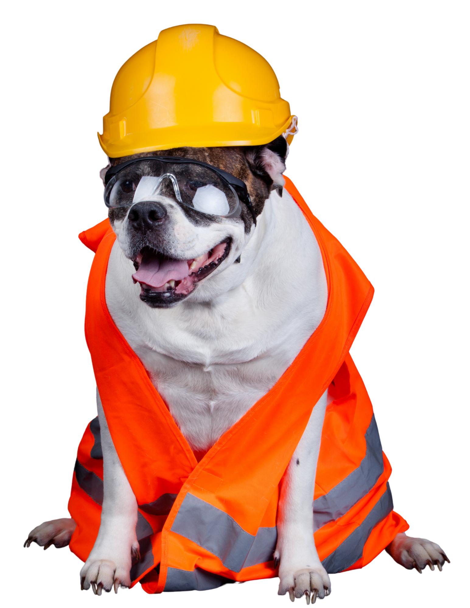 Construction Dog